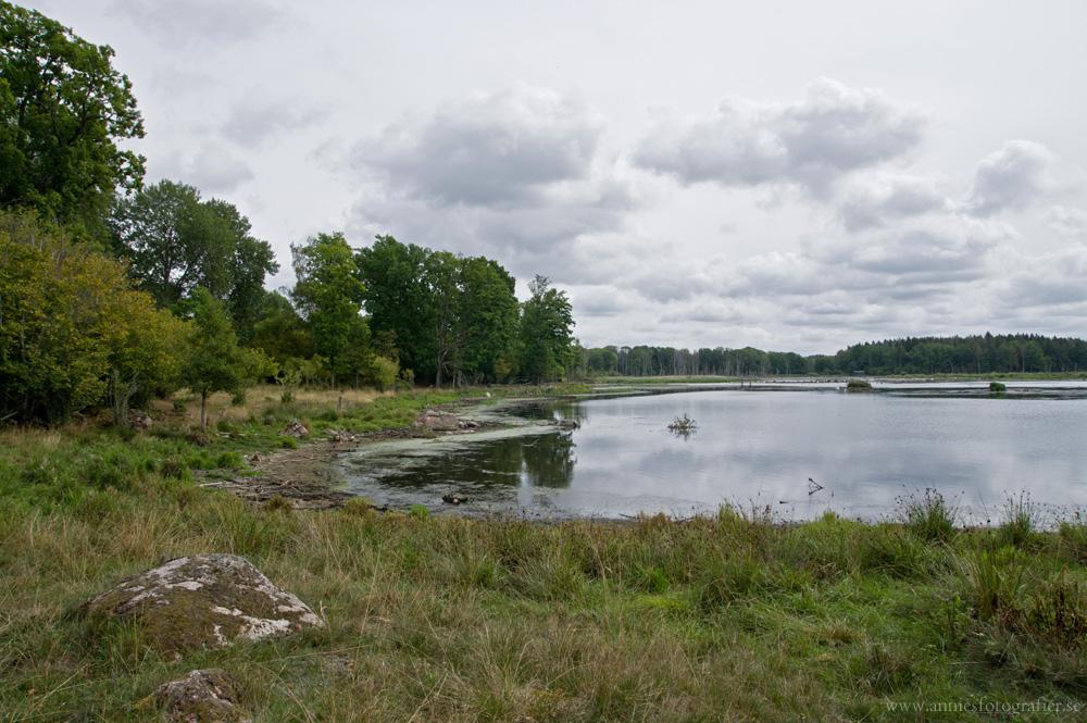 Rosenkällasjön, Tinnerö eklandskap, 21/8-2016 Foto: Annie Fredriksson
